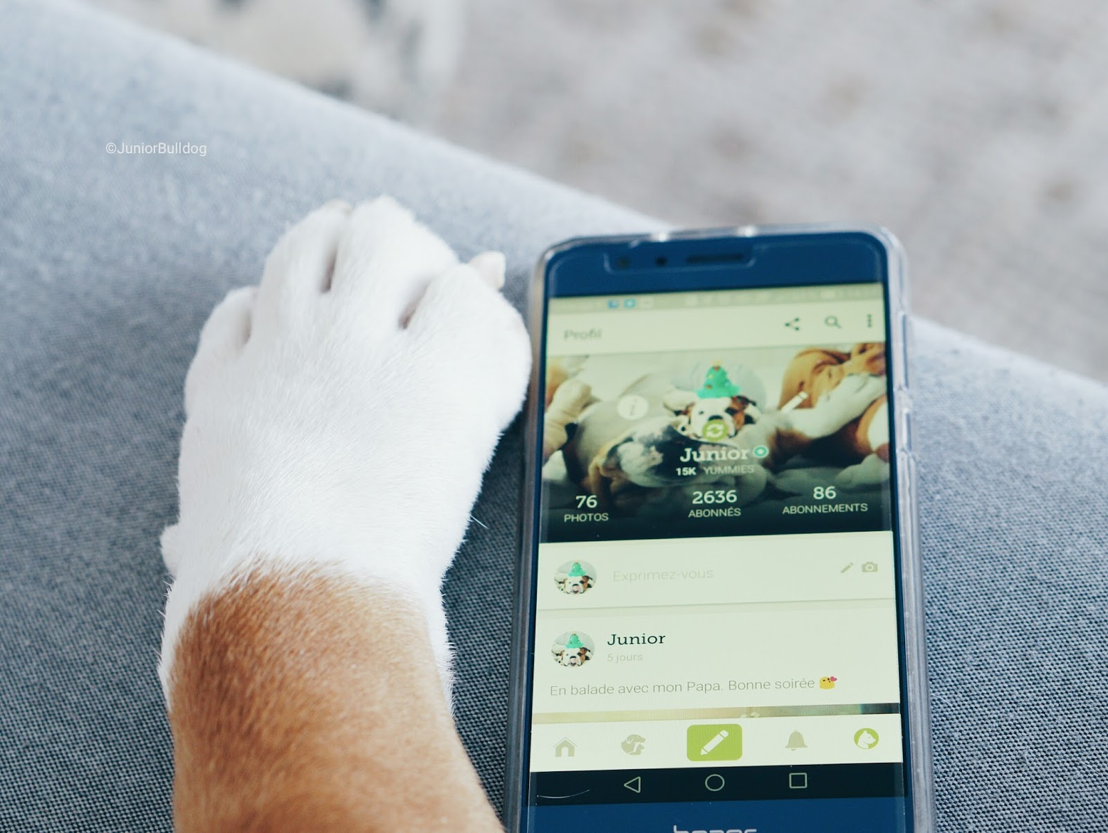 YummyPets réseau social animaux