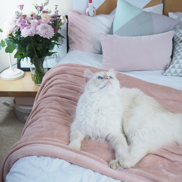 white cat on bed