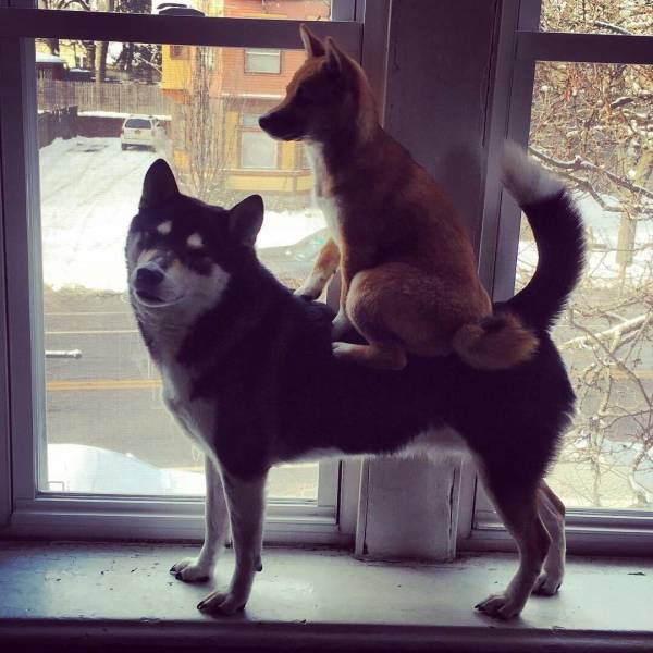 Cute dogs - part 218, best cute dog pictures, funny dog image