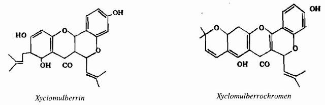 TPHH CÂY DÂU - Morus alba - Nguyên liệu làm thuốc Chữa Ho Hen