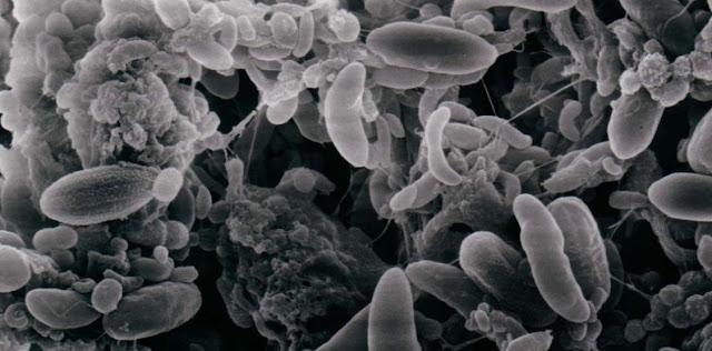 Bacterias y biologia