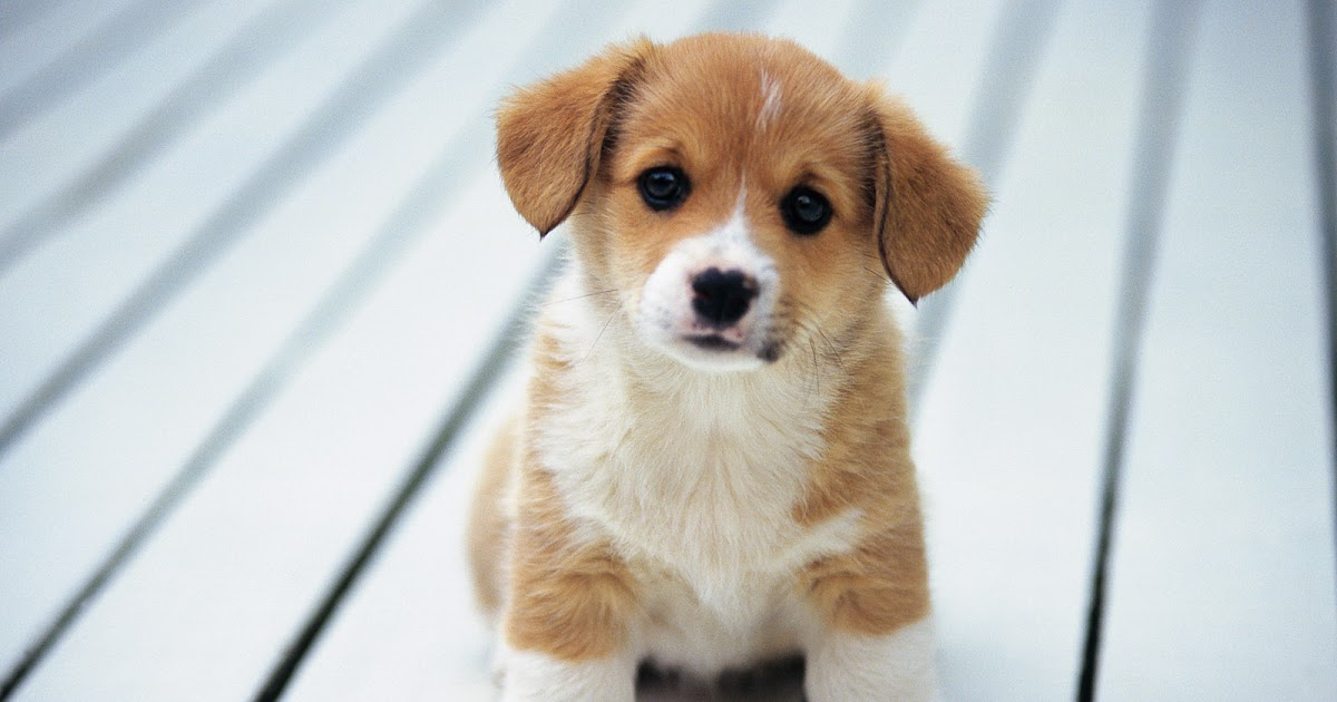 Best Pet Names For Girlfriend: I Like Dogs.: Top 10 Dog Names (Boy + Girl