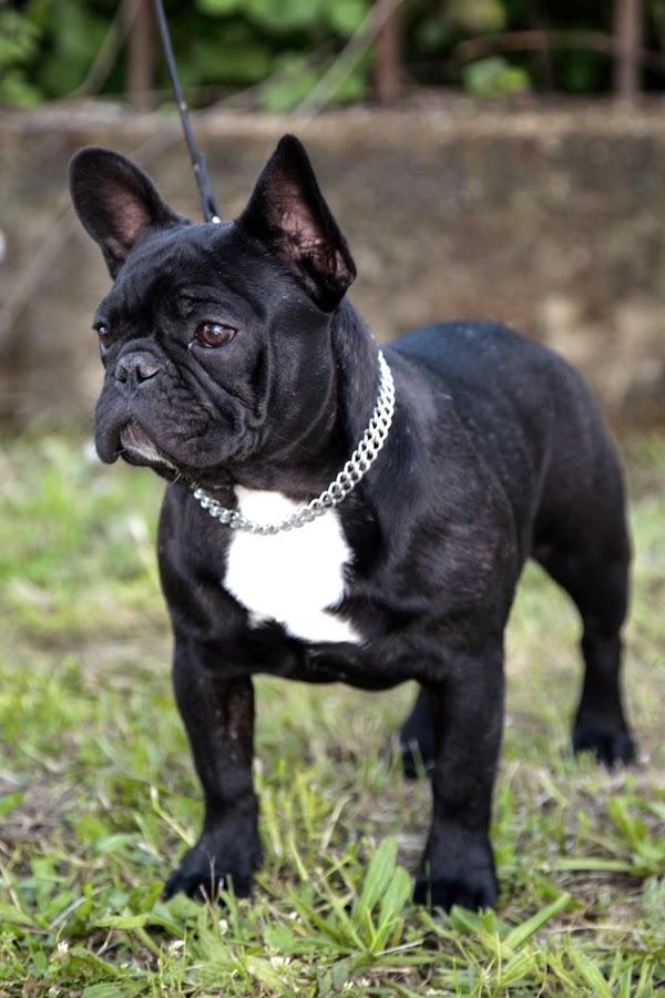 Le 10 razze di cani pi piccole al mondo  Mondo animali