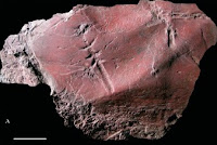 http://sciencythoughts.blogspot.co.uk/2014/01/interpreting-insect-trace-fossil-from.html