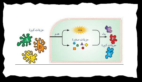 الهرمونات والتمثيل الغذائى