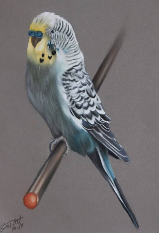 03-Budgie-Budgerigar-10-Svea-T-Animal-Portrait-Drawings-and-an-Eye-www-designstack-co
