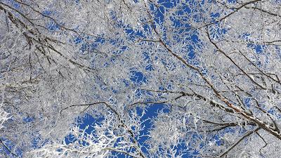 Verschneite Äste unter blauem Himmel