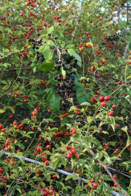 Frutos de la Ruta del camino del agua, Mogarraz