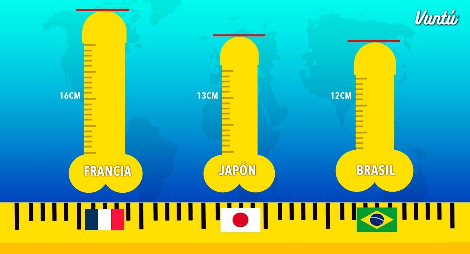 cuanto mide el pene promedio del hombre