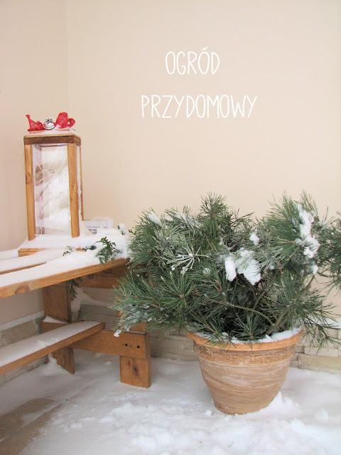 dekoracja bożonarodzeniowa przed domem