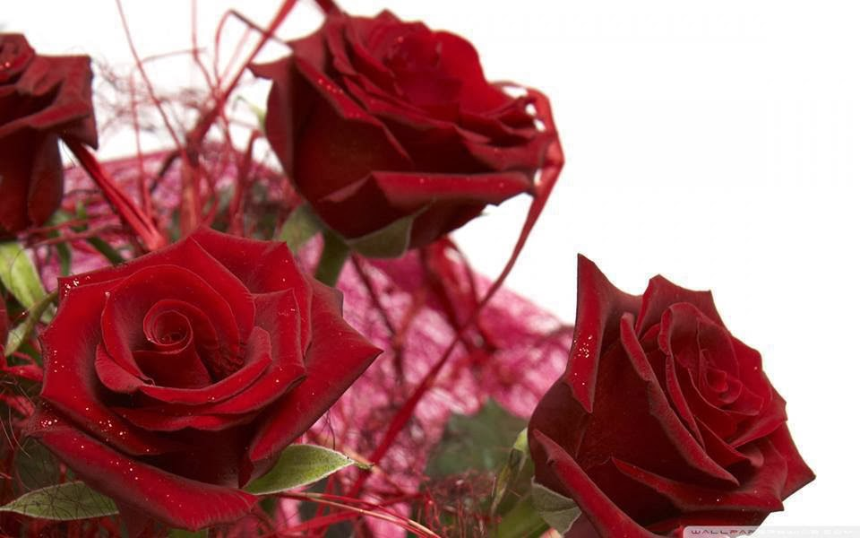 love you red rose
