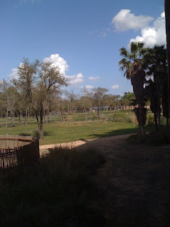 view from the Animal Kingdom Lodge
