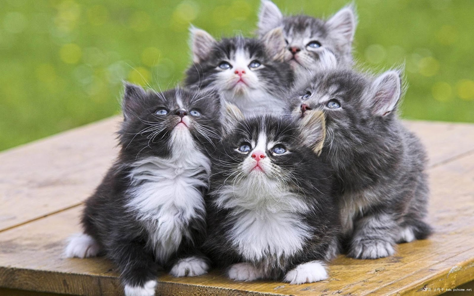 Sweety Cats Cute Cat s