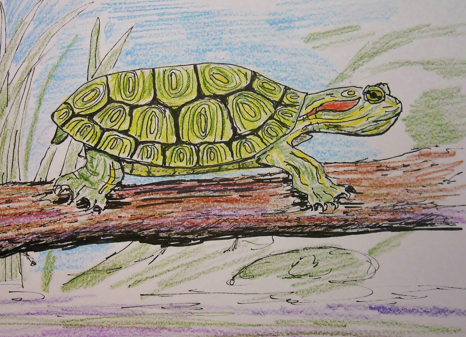 How To Draw Worksheets For The Young Artist How To Draw A Turtle Lesson And Worksheet For Young
