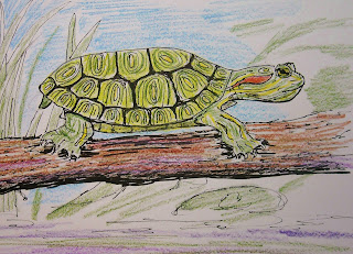 Example for how to draw a turtle lesson.