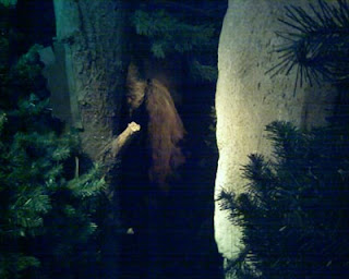 Bigfoot in a nocturnal setting