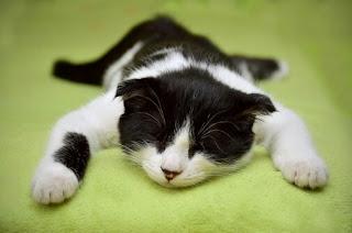 tanda tanda kucing sakit dan cara mengatasinya