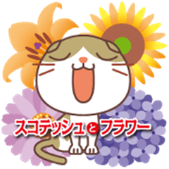 Scottish Fold and flower