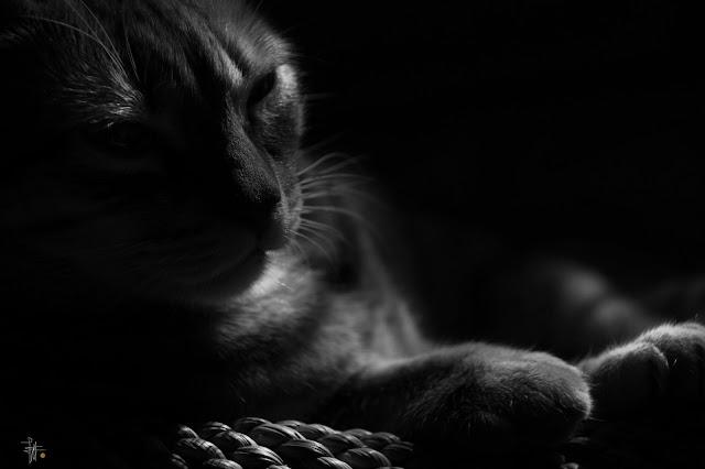 Soñar con Gatos ¿Que Significa?