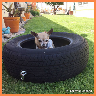 bailey in a tire