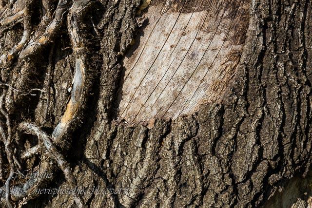 ecorces arbre