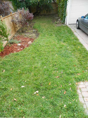 Toronto Fall Cleanup Yonge and Lawrence Backyard after by Paul Jung Gardening Services--a Toronto Organic Gardener