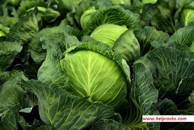 Cabbage - केबिज पत्ता गोभी