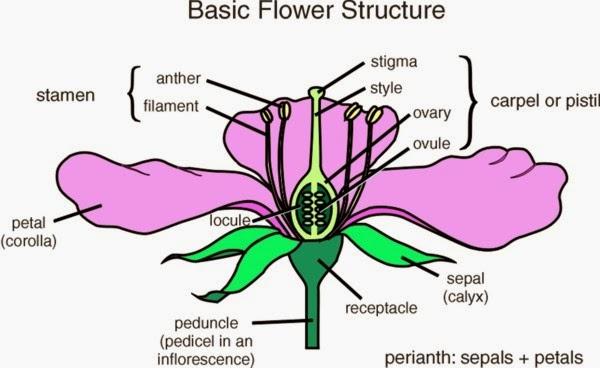 BASIC TERMENOLOGY ~ Wild Flora Of Dwarka