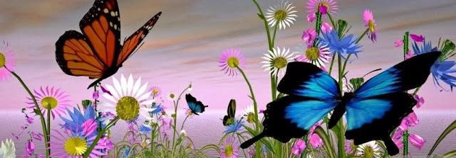 Butterflies Facebook cover
