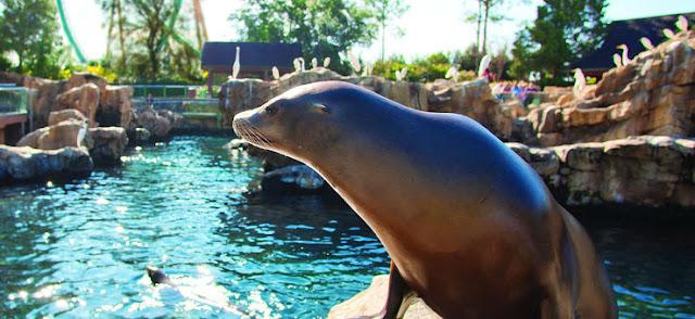 Animal na piscina do SeaWorld