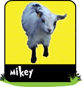 Mikey the kid goat