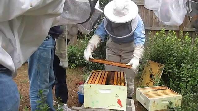 Κάθε πότε πρέπει να επιθεωρούμε τα μελισσια μας