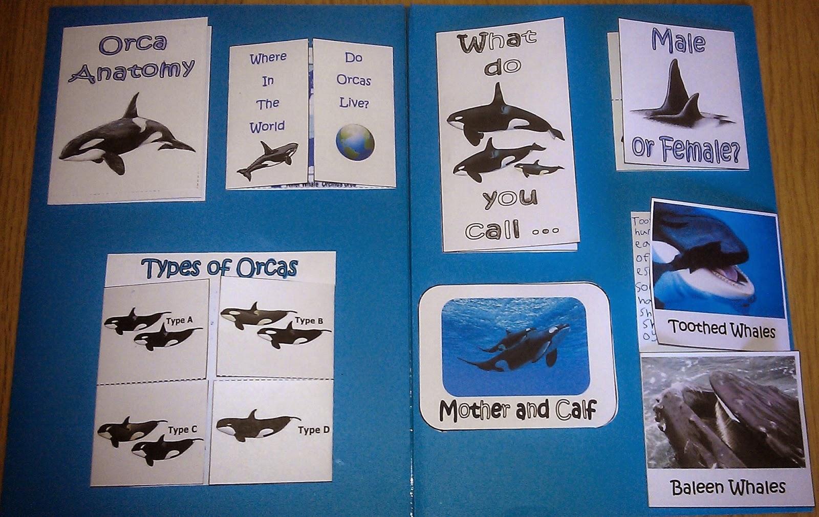 Iman S Home School Orcas Killer Whale Lapbook