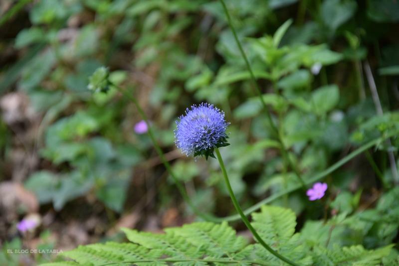 flores silvestres color azul