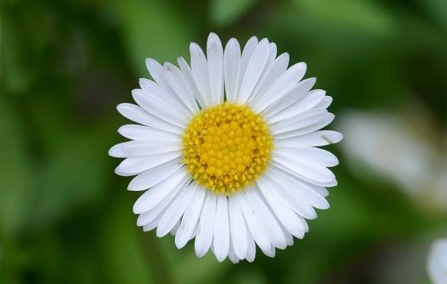 Какой цветок Ваш от рождения