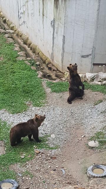 Beruang di Bukit Gambang Safari Park
