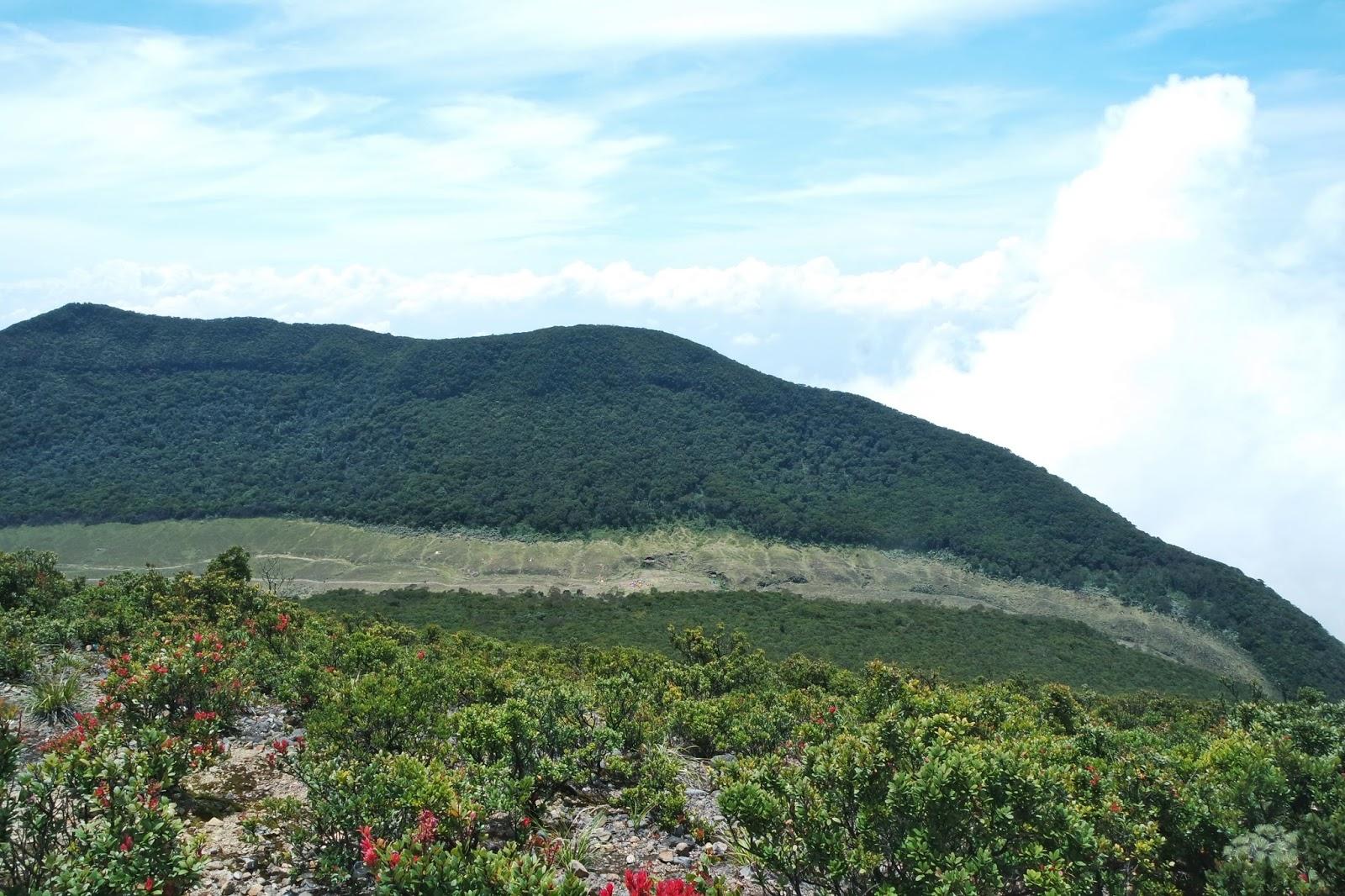 Surya Kencana, Gunung Gede