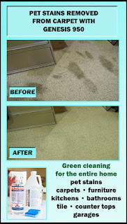 Best DIY Pet Stain Remover