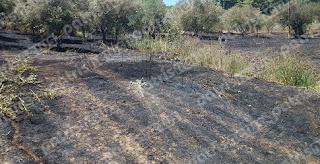 Ηλεία: Σωτήρια επέμβαση της Πυροσβεστικής στους Κρουνούς