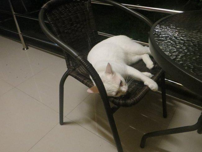 Кот лежит на кресле