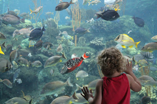 We are to view the Lord and His Word with the fascination of a child seeing an aquarium for the first time...