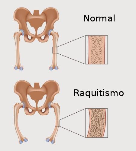 cuerpo humano: anatomia y fisiologia del aparato digestivo