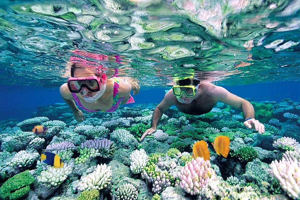 Lặn biển ngắm san hô ở Hòn Khô Quy Nhơn