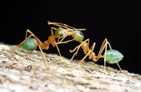 الحسد عند النمل: سبحان الله