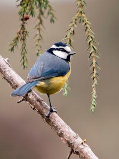Fauna de los Bosques Comestibles