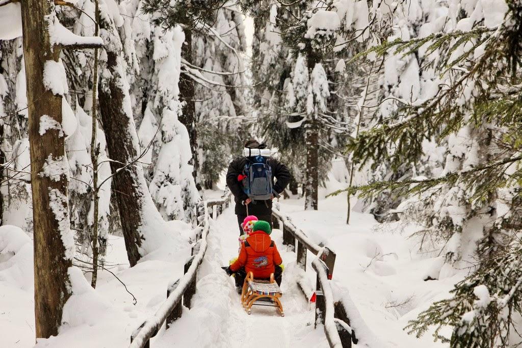 Schnee-Wanderung, Schwarzwald, Februar 2015