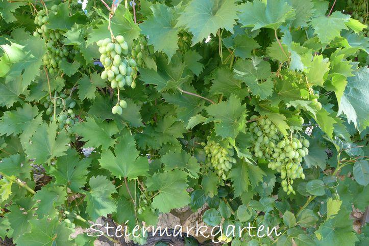 Kroatien´s-Vegetation-Steiermarkgarten