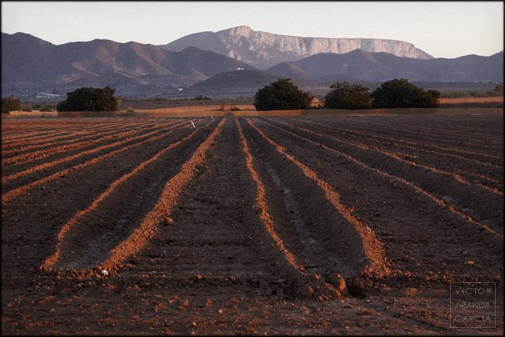 fotografia,cultivo,murcia,campo,agricultura,paisaje,peñas_blancas