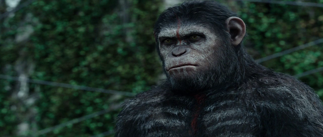 Dawn of the Planet of the Apes 2014 download hd 720p bluray