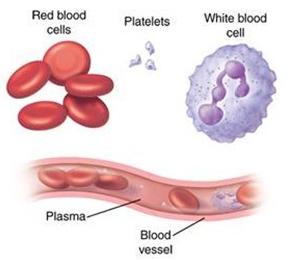 fungsi plasma darah bagi tubuh